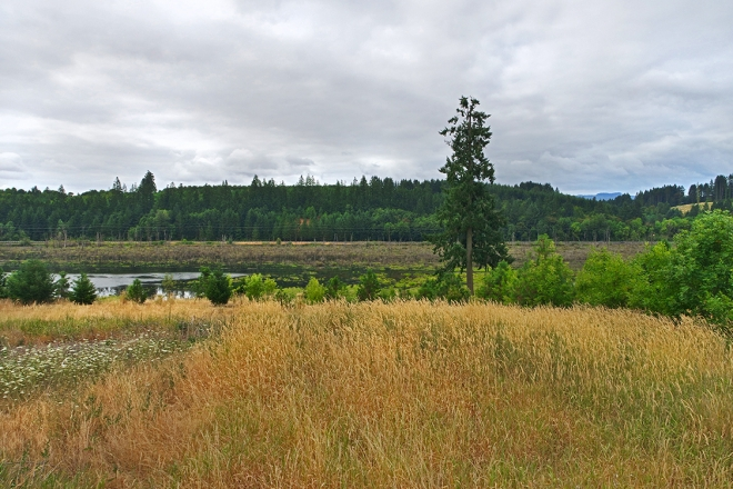 Design Team selection for Killin Wetlands in Banks, OR